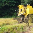 Working paddy harvest machine from back — Stock Photo