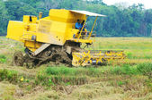 Harvesting paddy with harvesting machine — Stock Photo