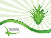 Speciale fondo verde con aloe vera design — Vettoriale Stock