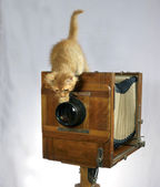 Old camera and red kitten — Stock Photo