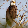 Majestic profile of a bald eagle. — Stock Photo #8047220