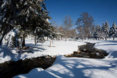 Creek runs through park in winter. — Stock Photo