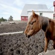 Stock Photo: Horse in dirt field.