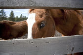 Close up of horse. — Stock Photo