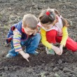 Two little children planting seeds on the field - Stockfoto