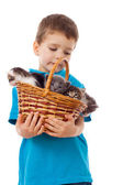 Little boy with kittens in wicker — Stock Photo