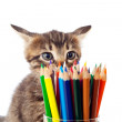 Stock Photo: Tabby kitten sniffing color pencils