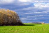 Podzimní krajina se zelená louka — Stock fotografie