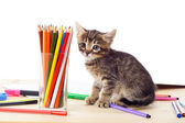Tabby kitten on table with pencils — Stock Photo