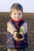 маленький мальчик на поле, держа завод — Стоковое фото