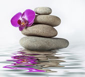 Orchid and stone with reflection — Stock Photo