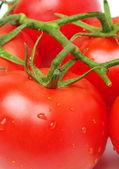 Tomatoes closeup — Stock Photo