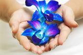 Ręce z kwiatem — Zdjęcie stockowe