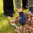 Cleaning up leaves in the yard — Stock Photo