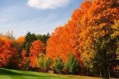 Gloria d'autunno — Foto Stock
