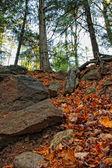 Skogen vandringsled — Stockfoto