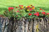 Old tree trunk flower pot creative gardening — Stock Photo