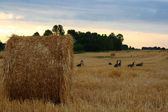 Bale of starw or hay against clear blue sky — Stock Photo
