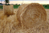 Staw bales in the field during harvest — Stock Photo