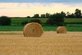 Fresh rolls of hay in field — Stock Photo