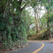 Roadway through tropical rainforest — Foto de stock #9294338