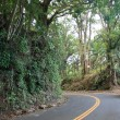 Foto Stock: Roadway through tropical rainforest