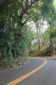 Roadway through a tropical rainforest — Stock Photo