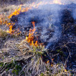 Burning dry grass in spring time — Stock Photo