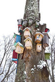 Winter tree with birds nesting-boxes collection — Stock Photo
