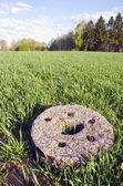 Historical millstone in the crop field — Stock Photo