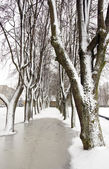 Winter tree alley with snow — Stock Photo