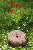Historical millstone in the garden — Stock Photo