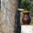 Stock Photo: Fresh spring maple sap