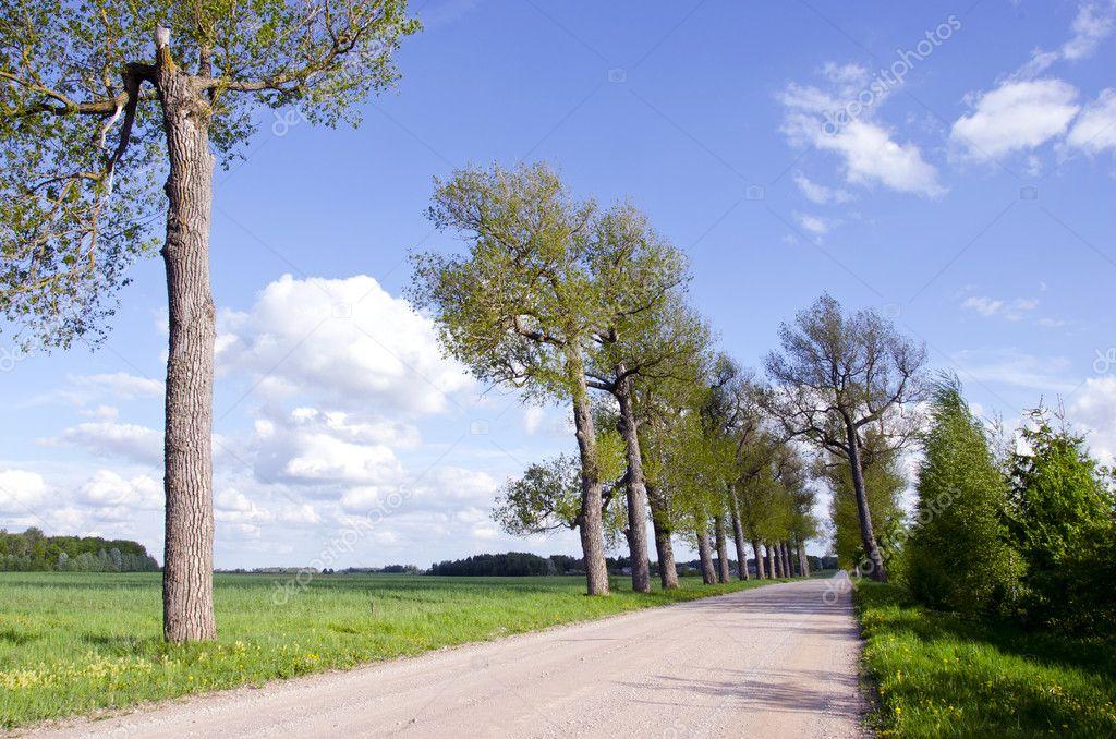 夏天风景树和路 — 图库照片08alisbalb2#9977581