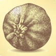 Vegetable pumpkin, hand-drawing. Vector illustration. - Imagens vectoriais em stock
