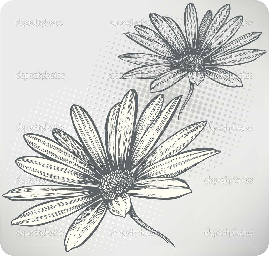 Blooming Flower Drawing