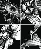 Conjunto de fundos gráficos florais — Vetor de Stock