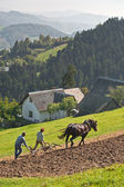 Couple of people plow the land — Stock Photo