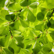 Green leaves, background — Stock Photo #10269892