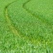 Stock Photo: Close up of fresh thick grass