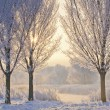 Winter Sunrise, frozen trees at lake — Stock Photo