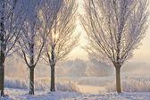 Winter Sunrise, frozen trees at lake — Stock Photo