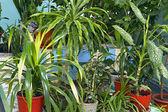 Many house plants in pots — Stok fotoğraf
