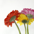 Trio de fleurs — Stock Photo