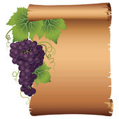 Grape branch with parchment — Stock Vector
