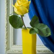 Rose in a glass vase — Stock Photo