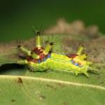 Lepidoptera — Stock Photo #9367384