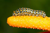 Insects on colorful plant in the wild — Stock Photo