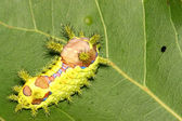 Lepidoptera on green leaf in the wild — Foto Stock