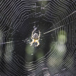 Spider and its web. — Zdjęcie stockowe